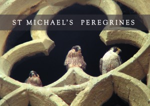 Peregrine Trefoil title